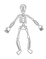 skeleton_sketch